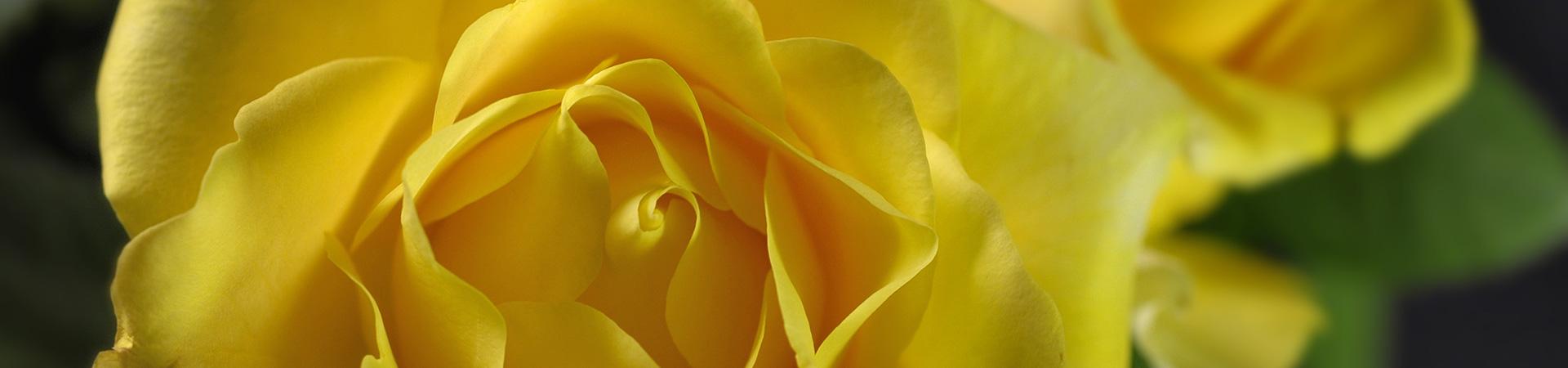 bandeau rose jaune