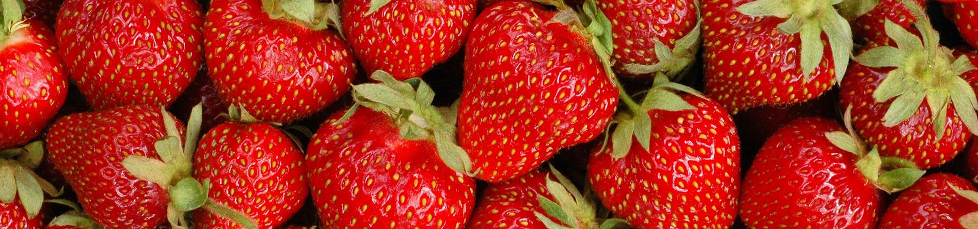 Bandeau fraises naturelles sans pesticides