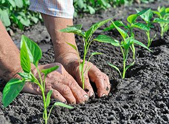 Cultiver Des Legumes De Qualite Dans Un Jardin Biologique Groupe