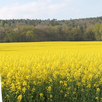 crop rapeseed oilseed rape canola